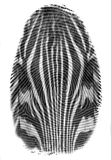 Zebra + Fingerprint= Zebra Print
