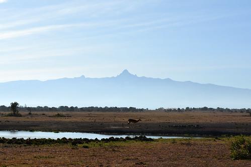 africa morning mist mountain sunrise haze hole kenya nairobi central safari mount antelope plains impala gazelle watering nanyuki