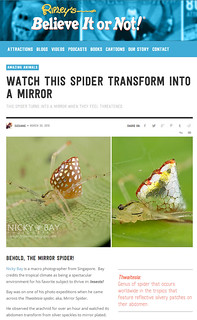 Watch this spider transform into a mirror