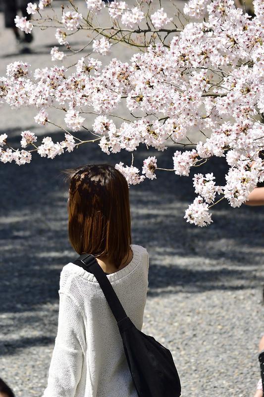桜の京都 南禅寺