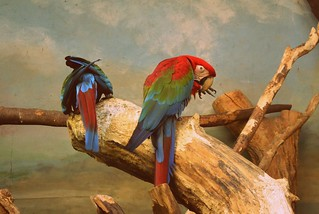 Parrots in the Warsaw Zoo