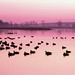 Small photo of Ducks on a lake with sunset