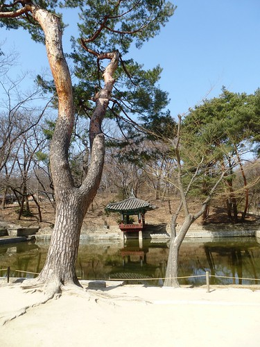 Co-Seoul-Palais-Changdeokgung-Jardin secret (16)