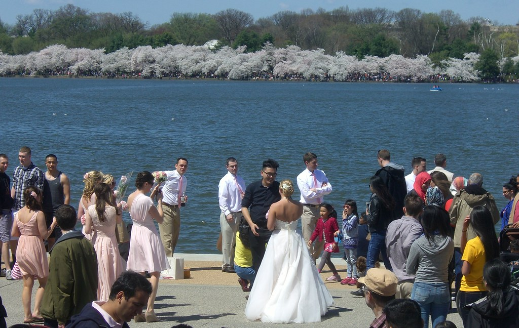 Wedding with the cherry blossoms
