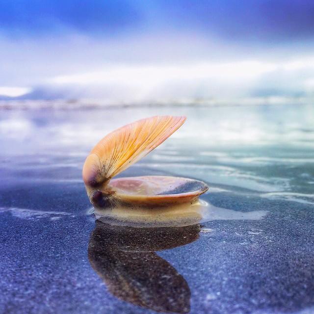 Sea shells on the seashore...