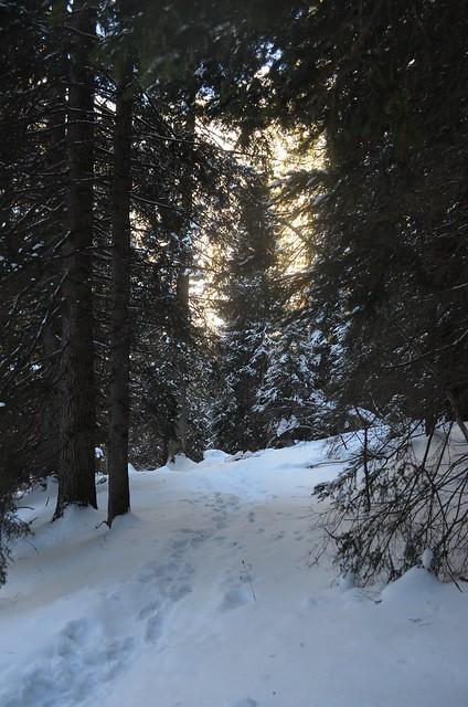 il sentiero in mezzo al bosco