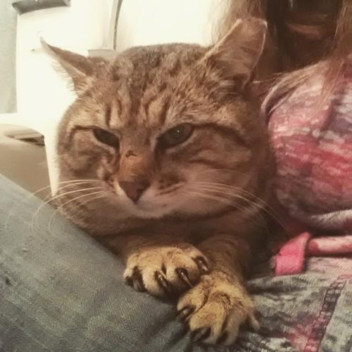 Slow, gentle bonding with Aslan. He's a toe-flexer! #FIVcat #FIVawareness #FIVpositive #formerstray #rescuecat #cat #catstagram #catsofInstagram