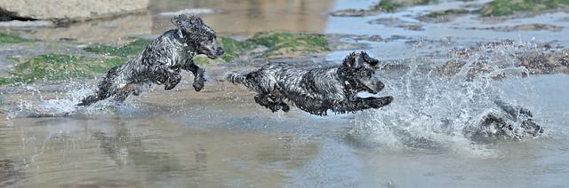 Splish Splash Dash