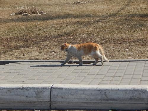 кот в коломне
