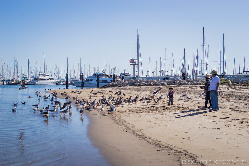 Feeding Seagulls Santa Barbara California