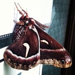 #Nature #loves Cameron McKirdy.  Captured this #photo before his shower.  #Butterfly Please identify #species #challenge