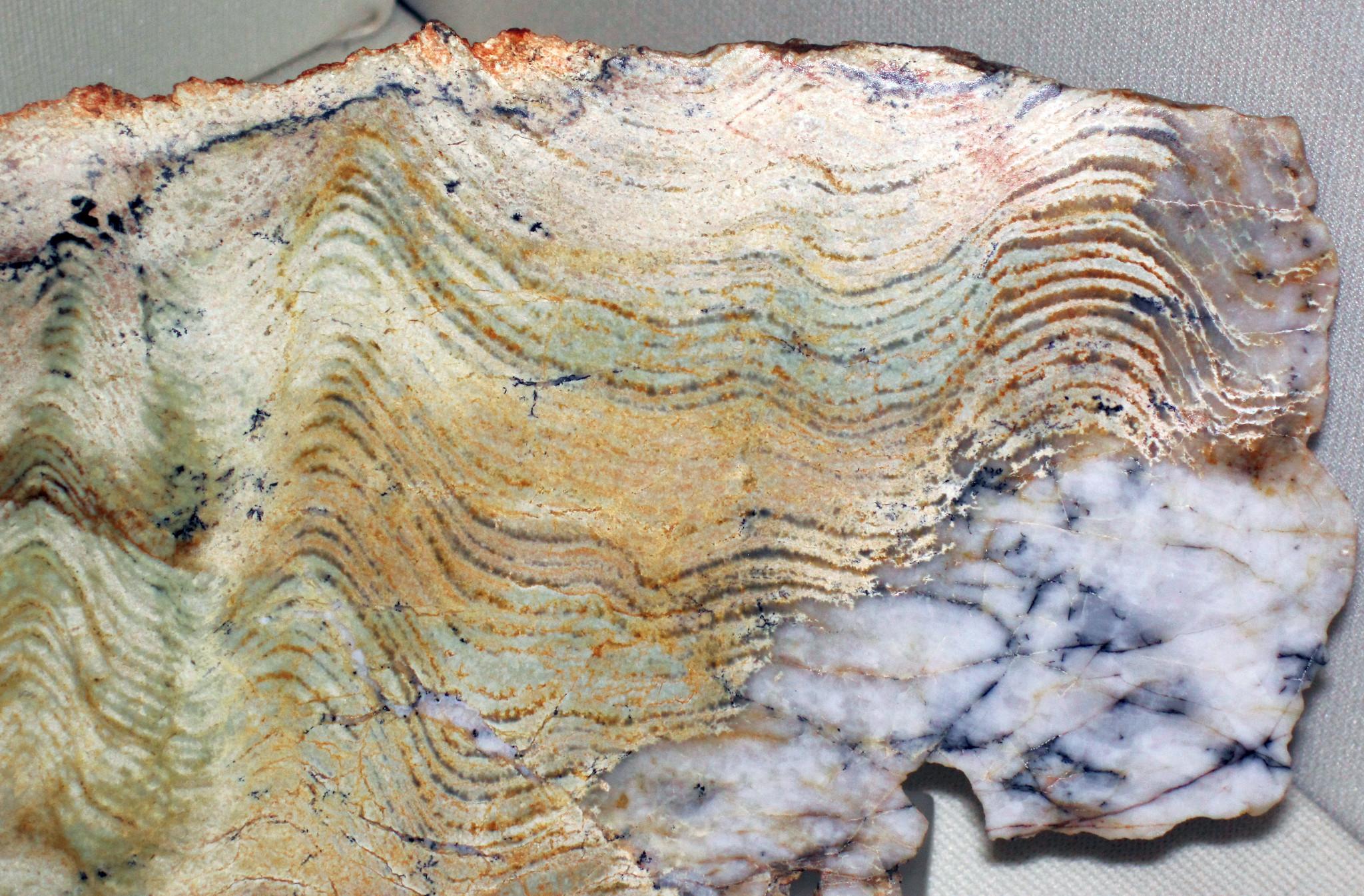 Stromatolite (Strelley Pool Formation, Paleoarchean, 3.35-3.46 Ga; East Strelley Greenstone Belt, Pilbara Craton, Western Australia) 3