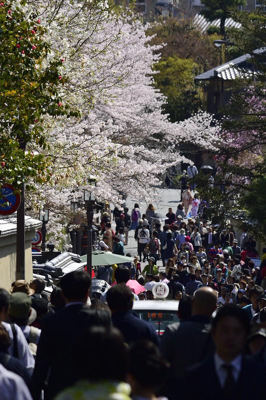桜の京都 円山公園
