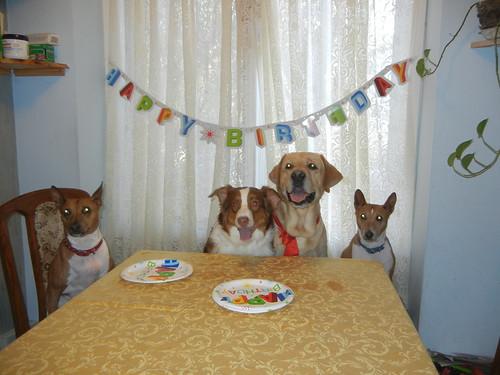 Noah's birthday!