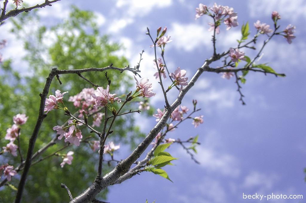 2015.Apr garden @Taipei 台北花卉村