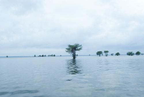 Lake Marion Plantation Islands-16
