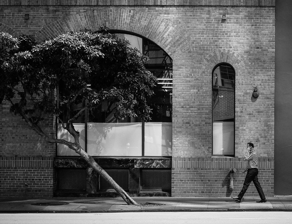 The Wall and Tree - San Francisco - 2015