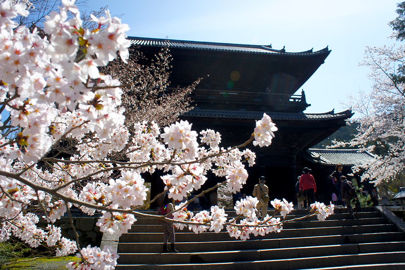 桜と三門/南禅寺(Nanzen-ji Temple / Kyoto City) 2015/04/02