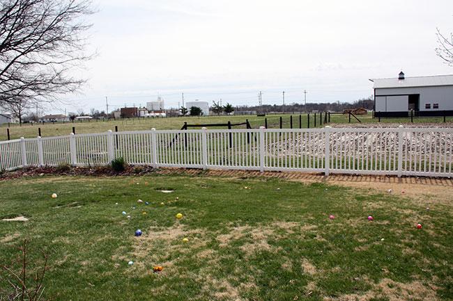 Eggs-in-Yard