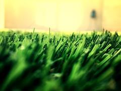 flower(0.0), leaf(0.0), plant(0.0), plant stem(0.0), flooring(0.0), grass(1.0), yellow(1.0), wheatgrass(1.0), light(1.0), macro photography(1.0), green(1.0), close-up(1.0),