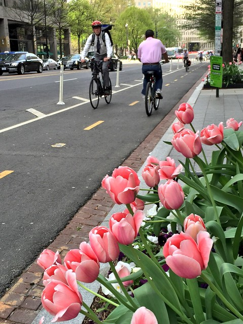 southbound on 15th St by tulips
