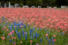 Wildflowers and Cemetery