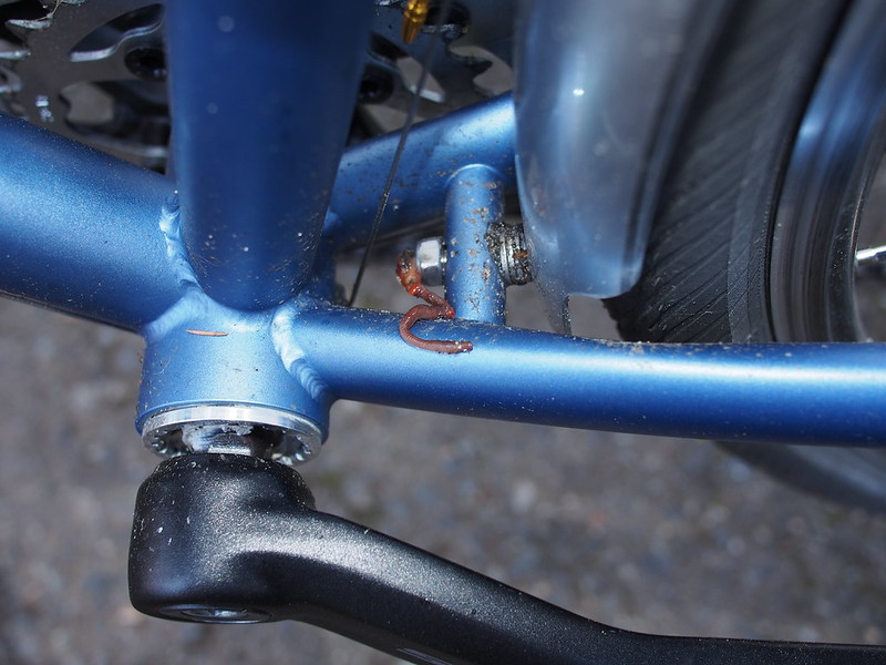 Chainstay Worm: Hopefully your bike doesn't have them!