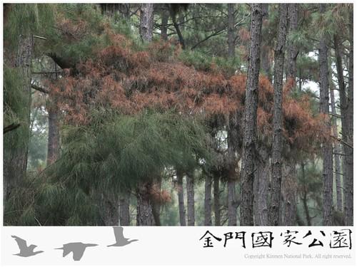 松材線蟲生物防治-04