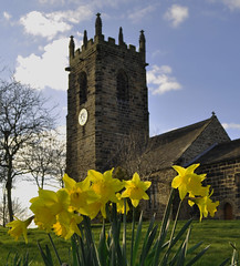Daffodils at St Michael