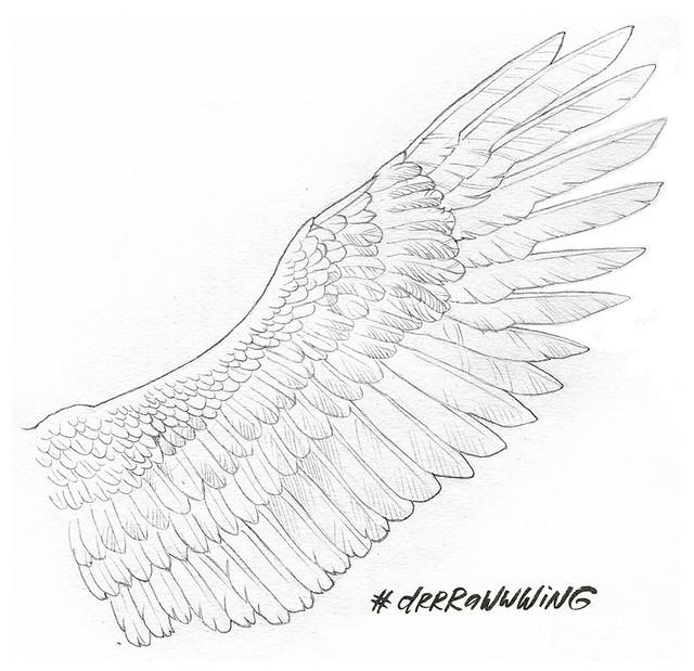 wing3