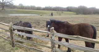 Horse 67 GE