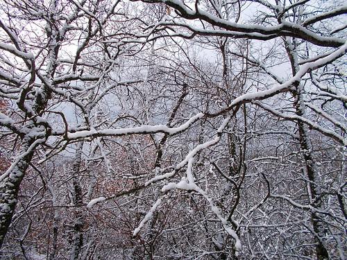 snow branch χιόνια άγιοσηλίασ κλαδιά