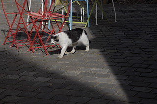 STREETLIFE OF A SHE-CAT: RUE AUX FROMAGES- CAEN-NORMANDY-FRANCE Mar 27th 2015