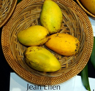 Mango  #282: JEAN ELLEN