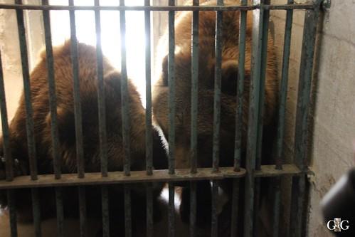 Zoo Rostock 11.04.201593