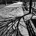 April Shadows by CVerwaal