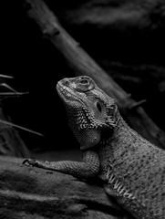 Reptilien Zoo