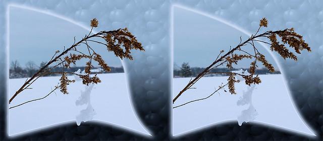 Winter Hanging On 1 - Cross-eye 3D