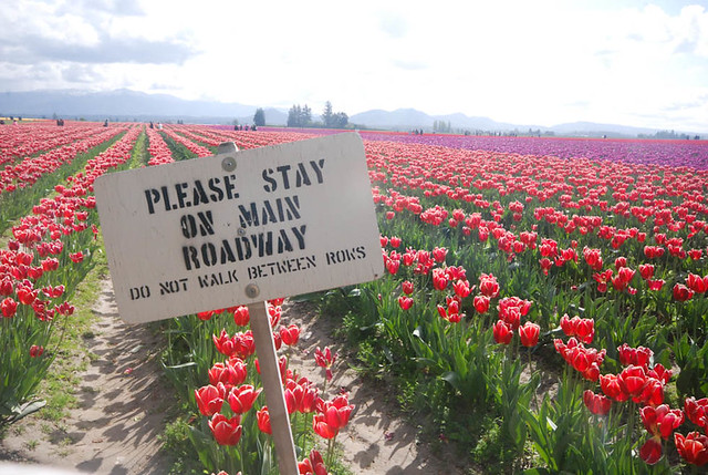 TulipsPath