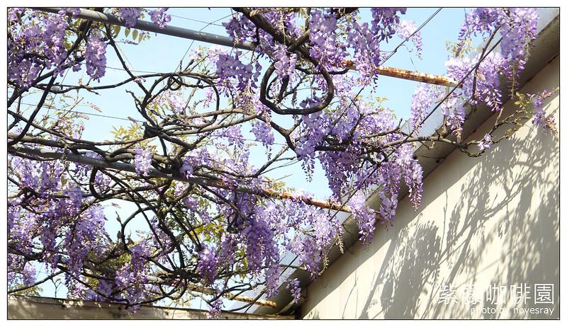 紫藤咖啡園 17