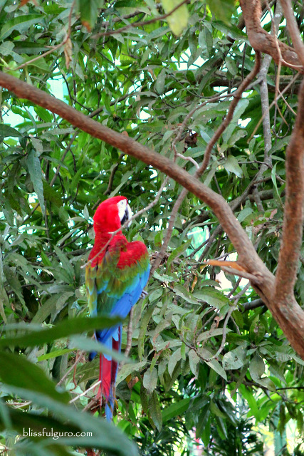 Magaul Bird Park JEST Camp Subic