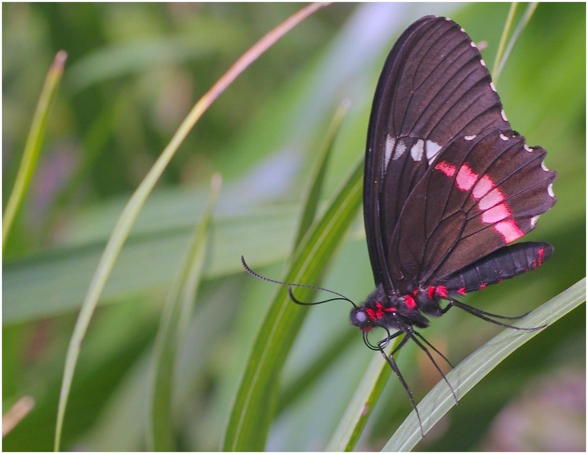 Papillons en Fêtes 2015 16804031787_6d84d40d34_o