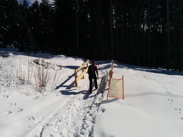 Nach der Überquerung der Skipiste geht es in den Wald