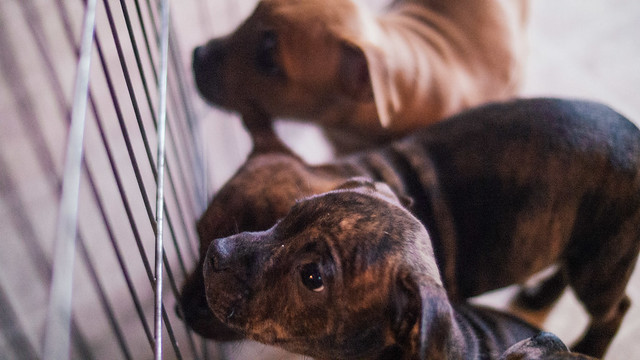 Healthy Advantage Puppy Food Price