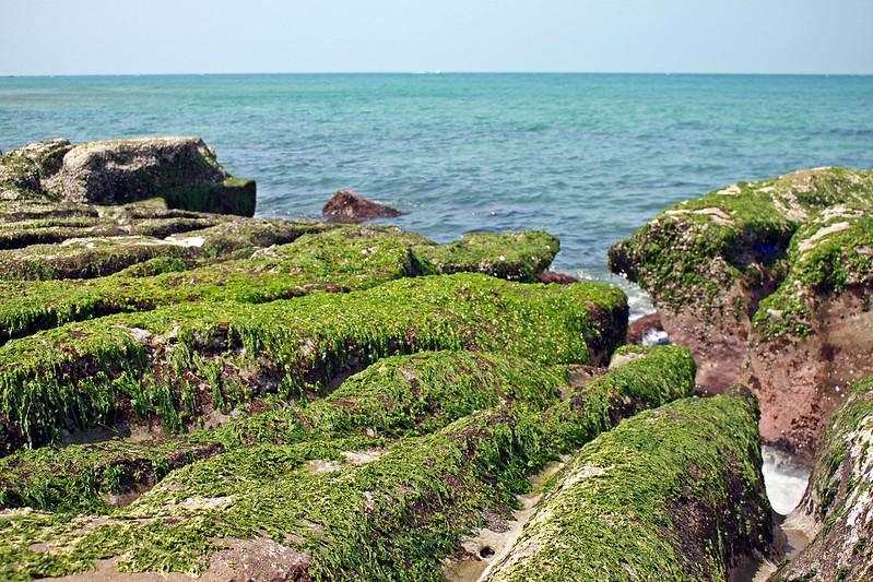 17度C台二線景點-石門-老梅綠石槽 (36)