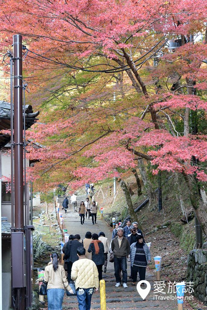京都赏枫景点 高雄西明寺 36