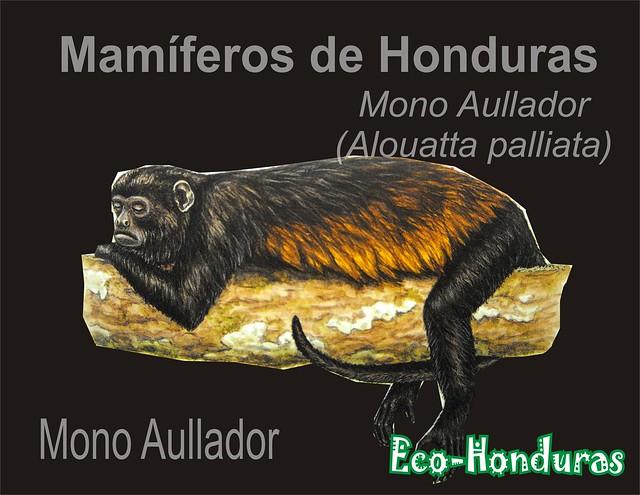Mono aullador2