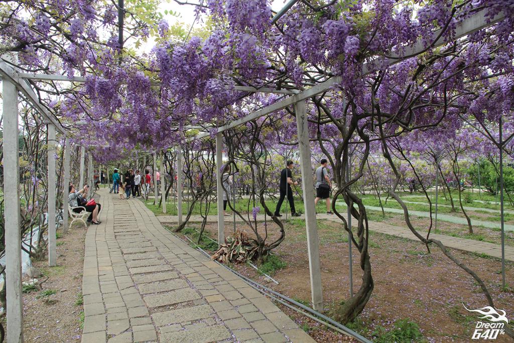 淡水紫藤咖啡園26