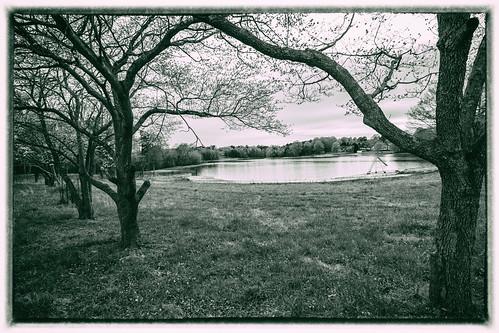 blackandwhite lake monochrome beautiful landscape peace northcarolina portal dogwoods gastonia robinwoodlake dorameulman