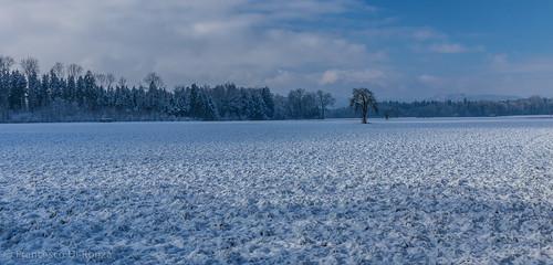 schnee trees snow nature landscape schweiz natur landschaft bäume sanktgallen zuzwil züberwangen
